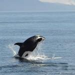 British Columbia's Yachters' Paradise