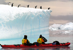 Penguins from a kayak