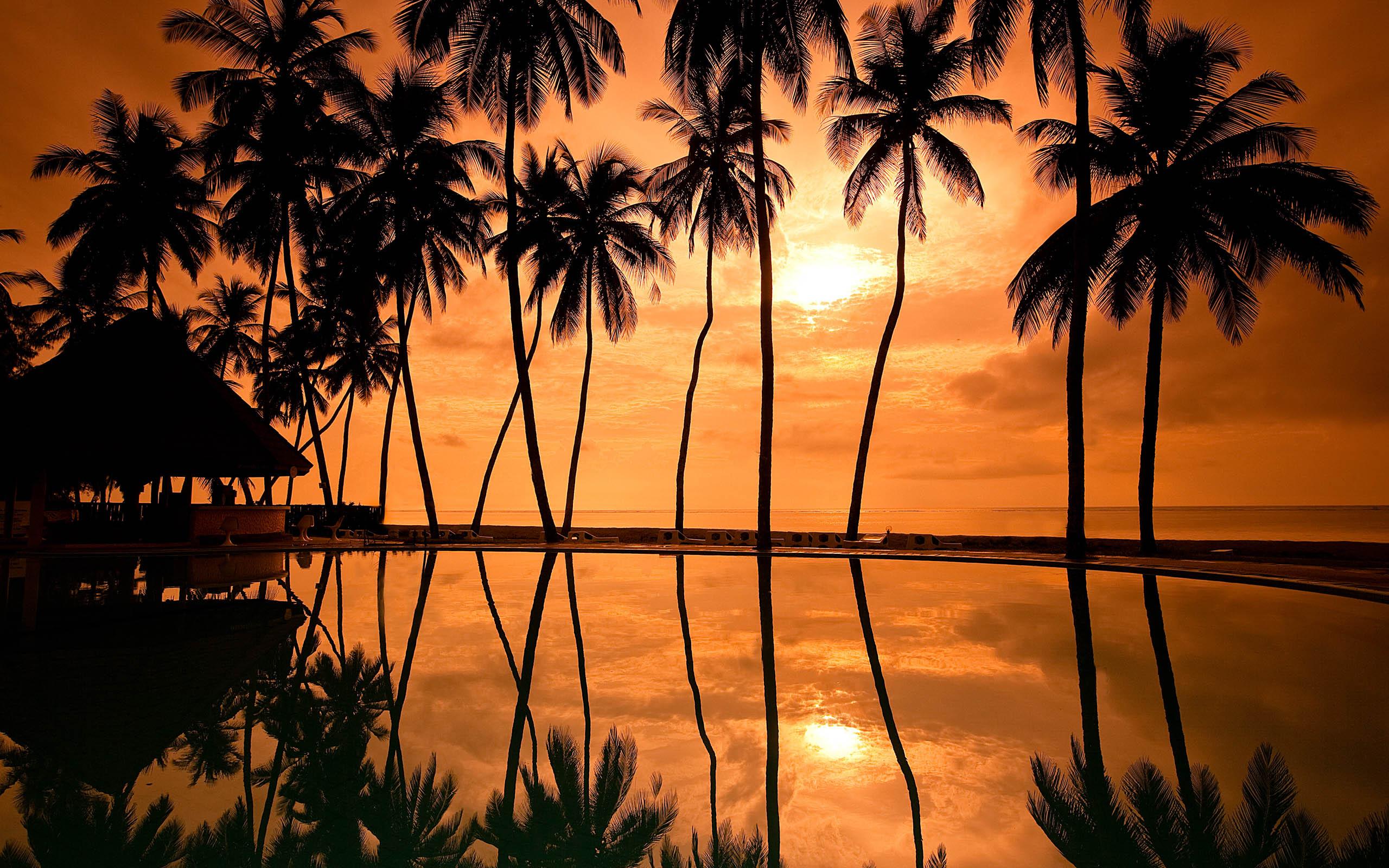 природа бассейн рассвет солнце пальмы отдых  № 2455803 бесплатно