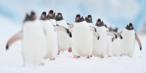 Antarctica_Nov 2011 (1).jpg