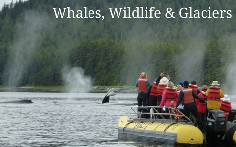 Whales Wildlife and Glaciers webpage pic