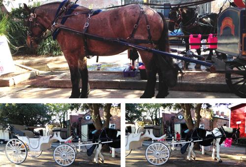 horse drawn carraige tour charleston south carolina