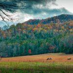 North Carolina hillside wildlife in autumn